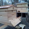 Fall Beekeeping Course