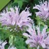 Stars in the Garden! Pollinator Garden Seasonal Tour Series