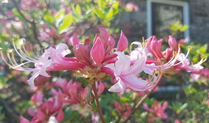 "Volunteer: ""Coffee Grounds"" Tuesday Morning Gardening"