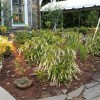 Volunteer: Contact our Landscape Manager