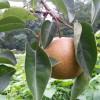 Volunteer: Awbury Food Forest 3rd Saturday Work Days