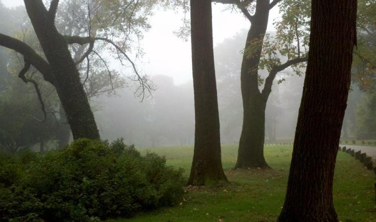 Arboretum Features