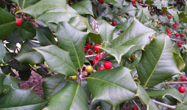 Winter Wassailing w/ Philly Orchard Project