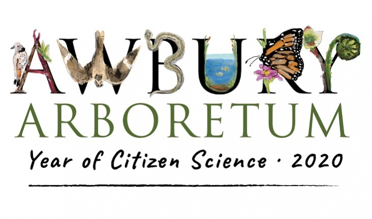 2020: The Year of Citizen Science