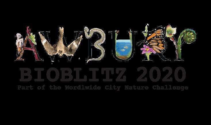 Be a Citizen Scientist at our Annual BioBlitz
