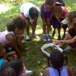 Pond Lesson 2