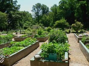 Community Garden at Awbury Arboretum - Philadelphia, PA
