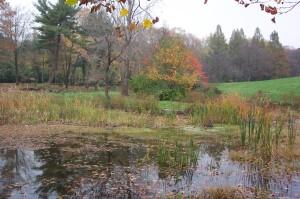 Wetlands at Awbury Arboretum