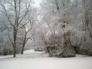 Seasonal Interest at Awbury Arboretum