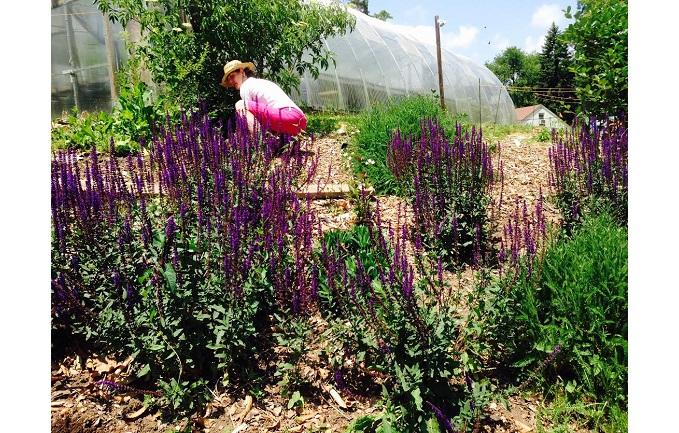 pollinator garden - 733x433
