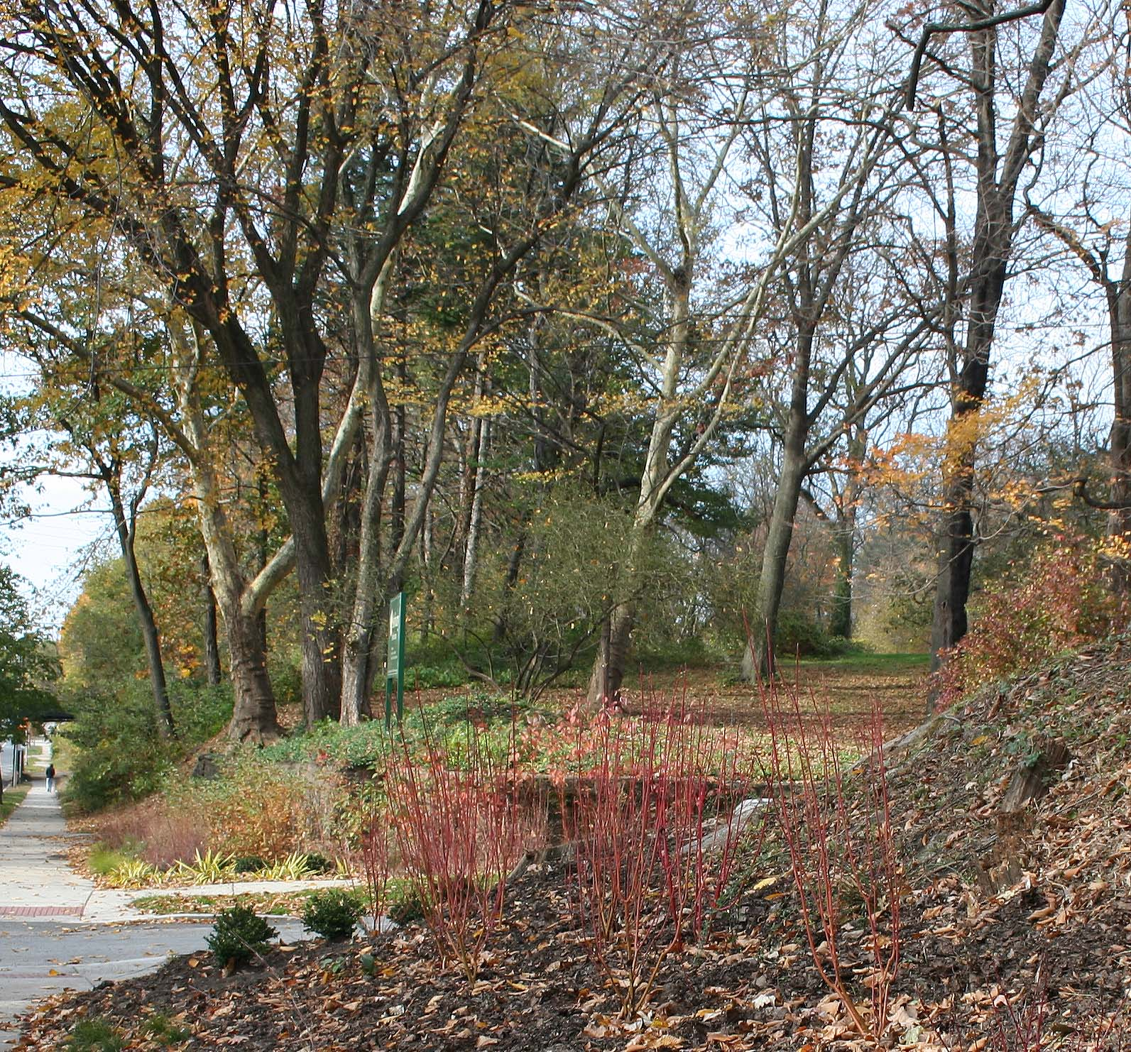 Thinning tree canopy and fall color at the Chew Avenue Entrance to Awbury Arboretum, photo: C. Levy