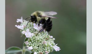 bee-close-up-header
