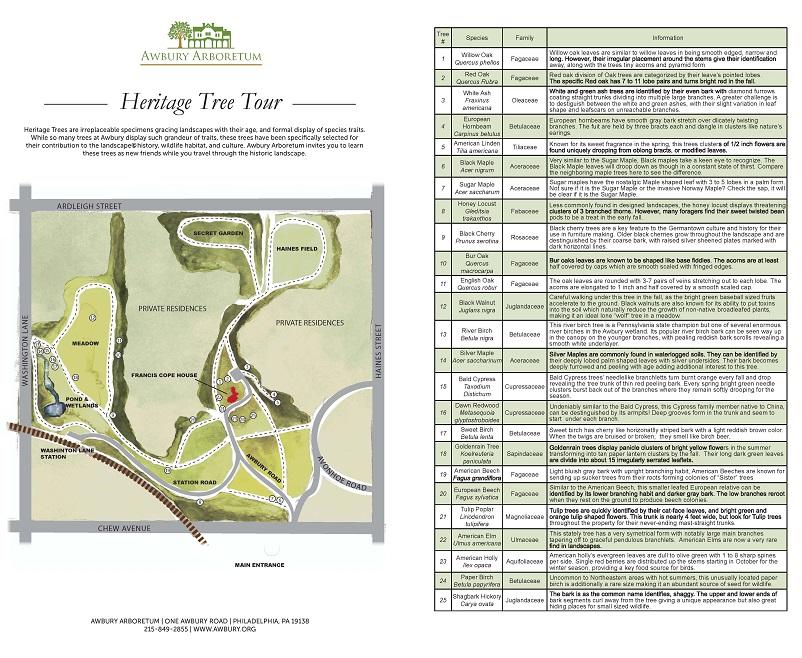 Heritage Tree Tour