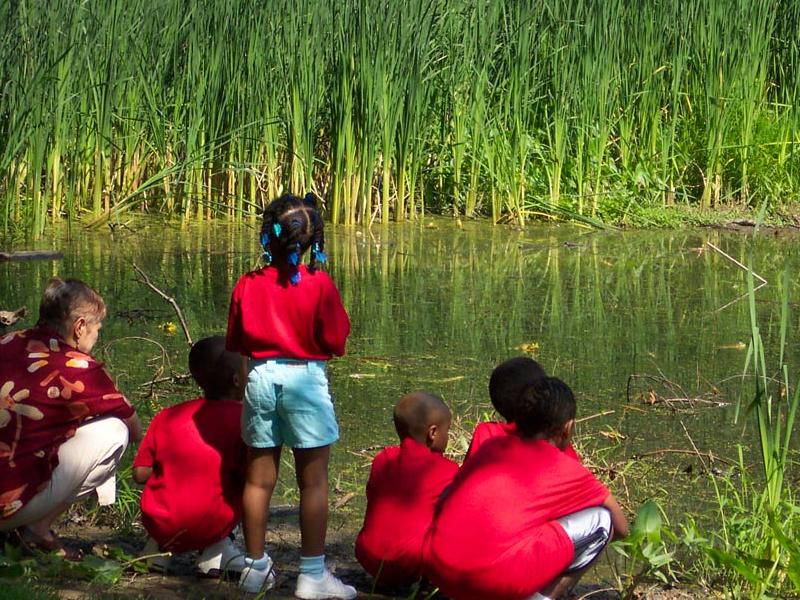 Wetlands at Awbury Arboretum | Philadelphia, PA
